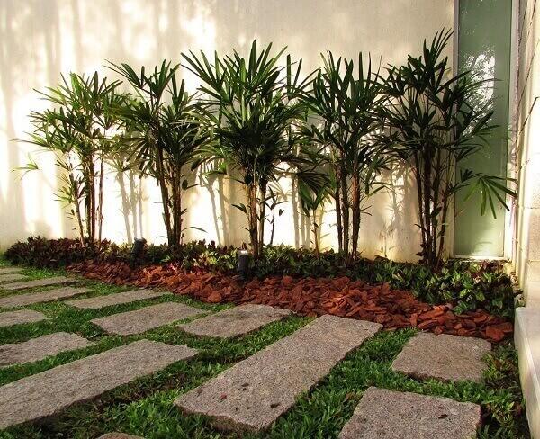 Plantas para jardim Palmeira Ráfis