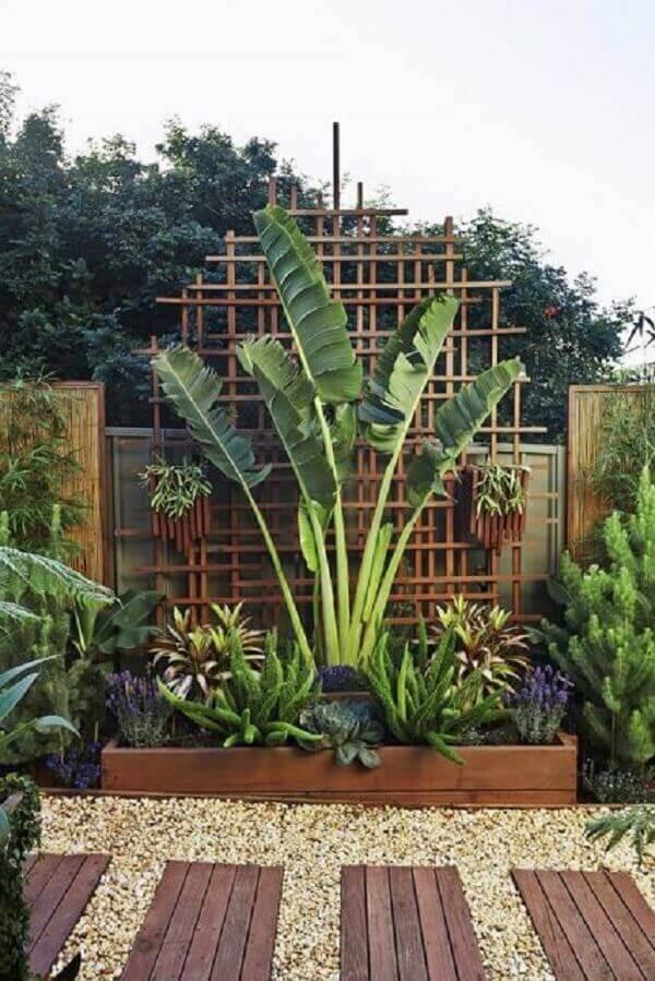 Plantas para jardim bananeira ornamental