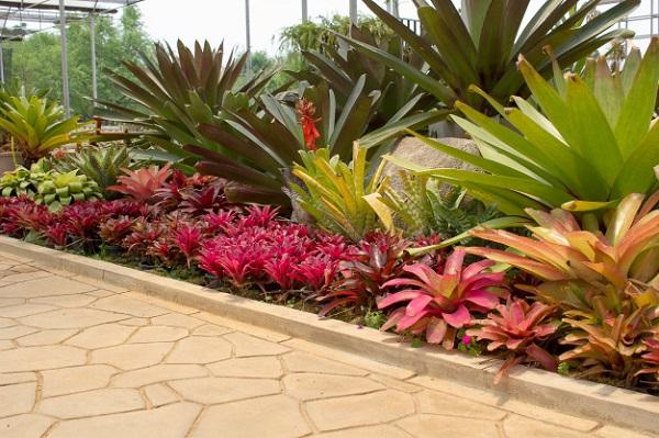 Plantas para jardim bromélia