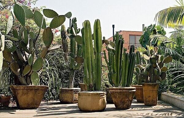 Plantas para jardim com cactos
