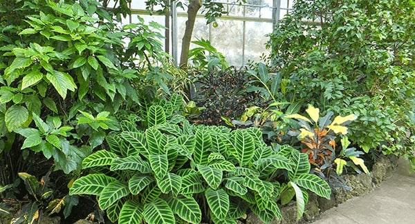 Plantas para jardim diversas