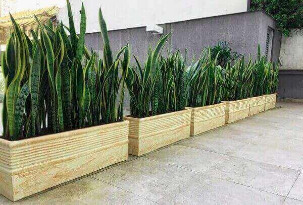 Plantas para jardim em vasinhos Espada de São Jorge