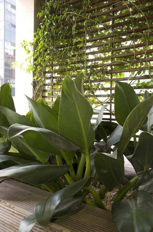 Plantas para jardim externo pacová