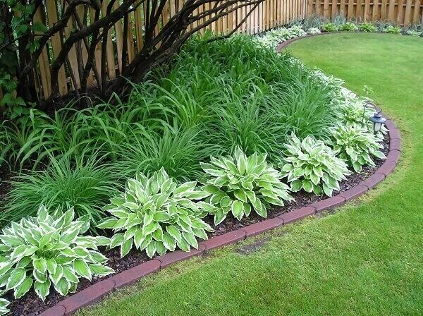 Plantas para jardim rasteiras