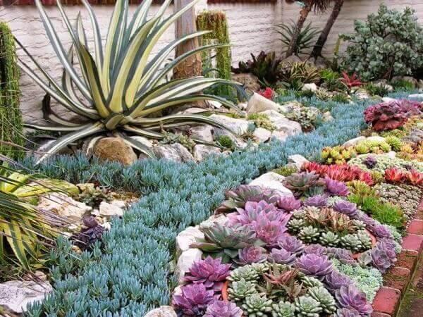 Plantas para jardim suculentas