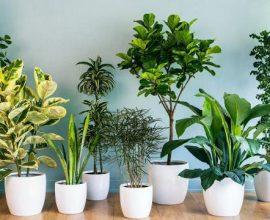 Diferentes tipos de planta para dentro de casa
