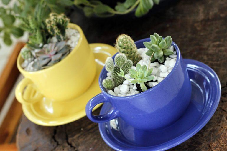 O mini jardim de suculentas é montado em xícaras de porcelana coloridas