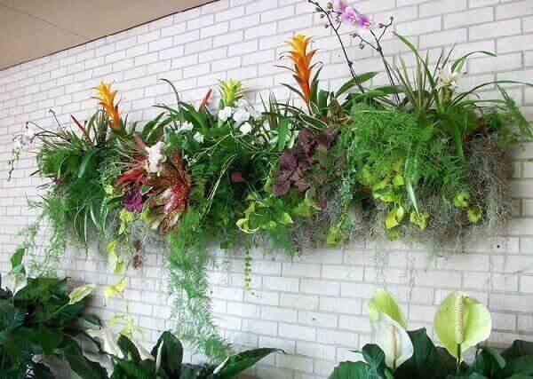 Tipos de plantas para jardim vertical