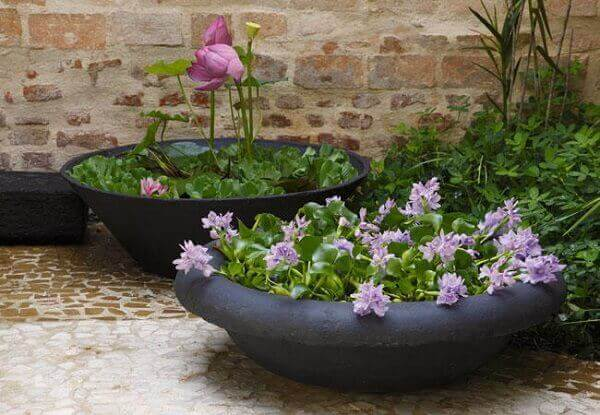 Tipos de plantas aquáticas para compor um jardim