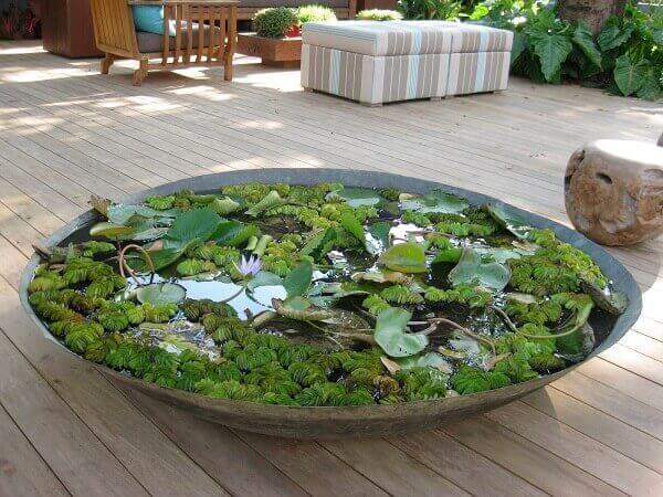 Tipos de plantas aquáticas plantadas em vaso bacia