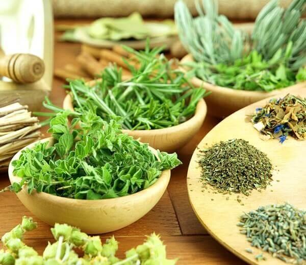 Tipos de plantas medicinais eficazes
