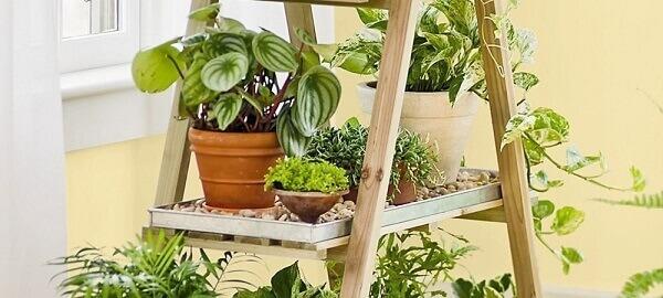 Tipos de plantas medicinais que auxiliam na filtragem do ar em ambientes fechados