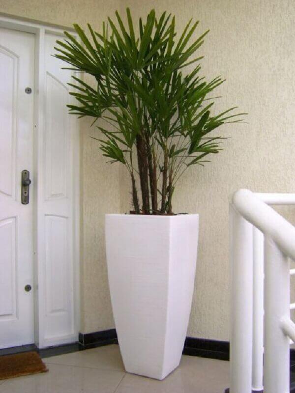 Tipos de plantas ornamentais como a Ráfis para sala