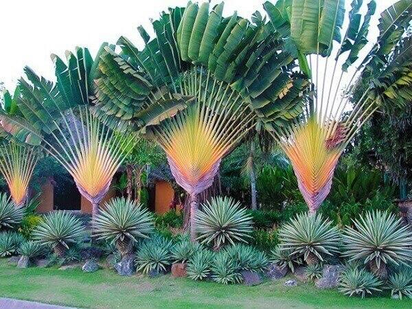 Tipos de plantas ornamentais grandes