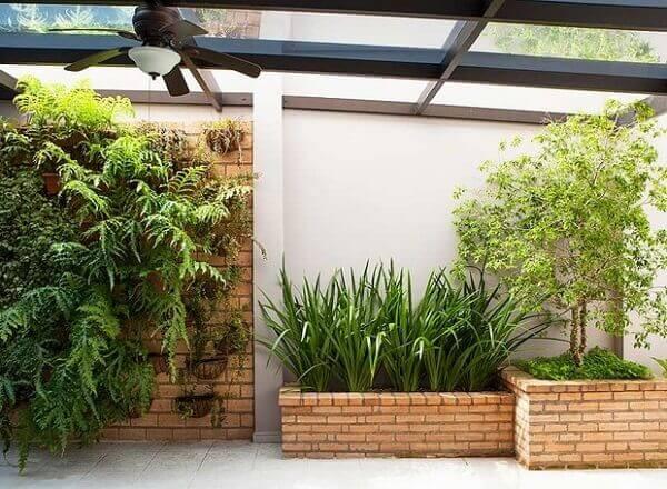 Tipos de plantas ornamentais no jardim vertical com peperomias