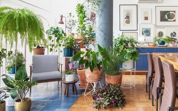Tipos de plantas ornamentais para deixar relaxante o ambiente