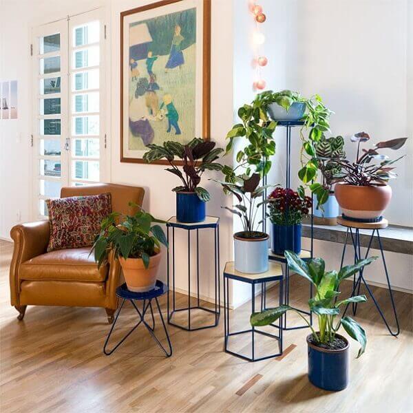 Tipos de plantas ornamentais para dentro de casa