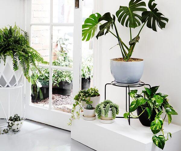 Tipos de plantas ornamentais para espaços pequenos
