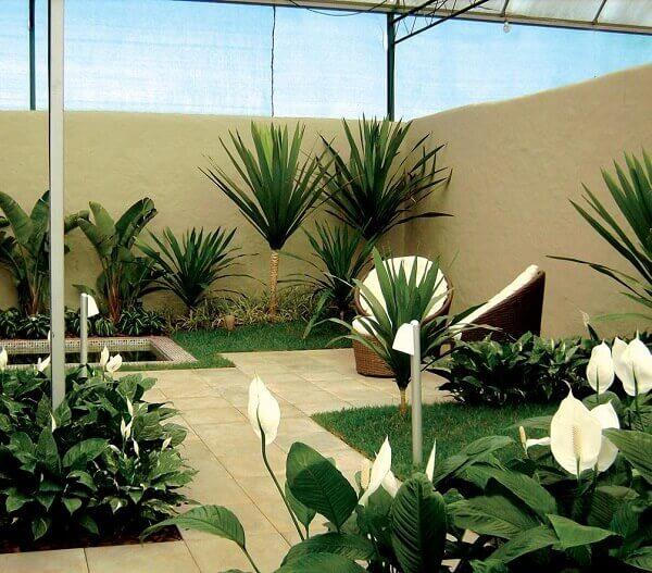 Tipos de plantas ornamentais para jardim pequeno