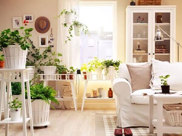 Tipos de plantas ornamentais trazem frescor e aconchego a sala