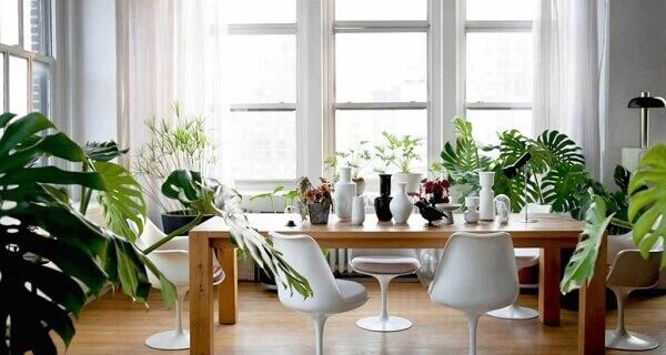 Tipos de plantas ornamentais para ambientes clean