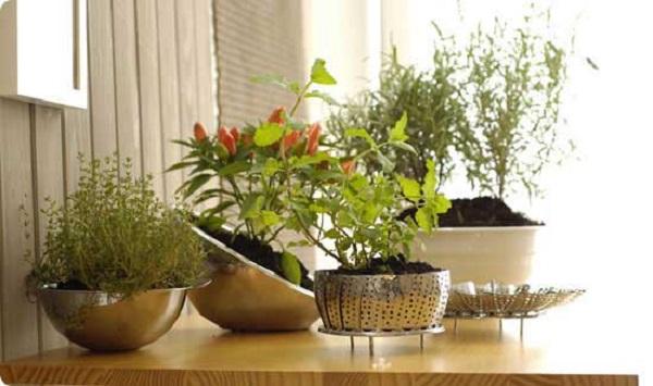 Tipos de plantas para apartamento