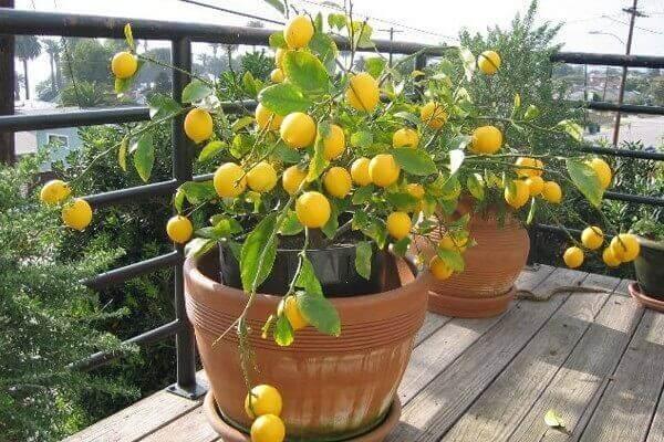 Tipos de plantas para horta caseira