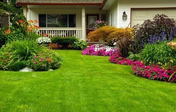 Tipos de plantas para jardim colorido