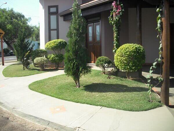 Tipos de plantas para jardim com muita insolação