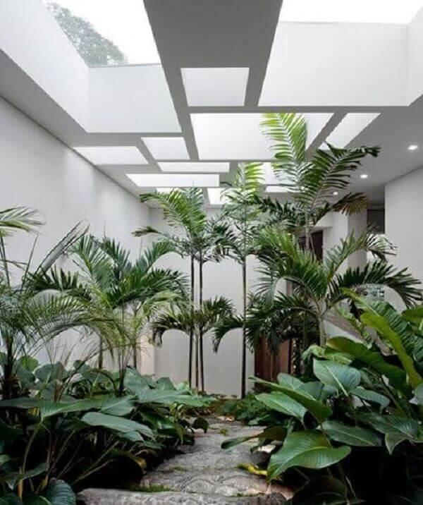Tipos de plantas para jardim de inverno com clarabóias