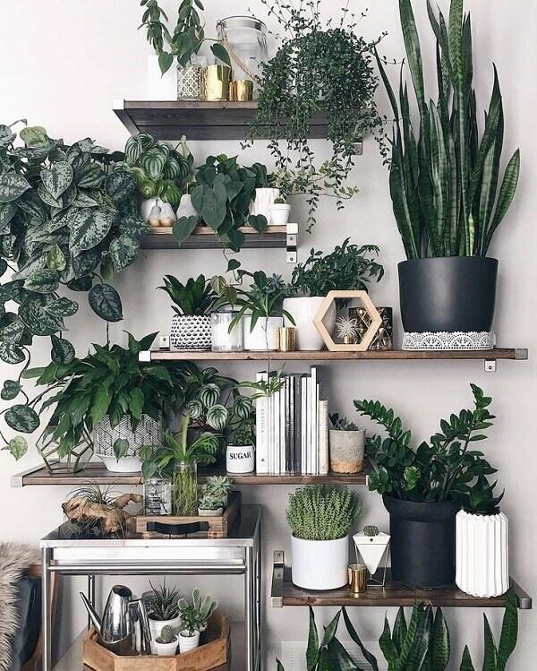 Tipos de plantas para sacada
