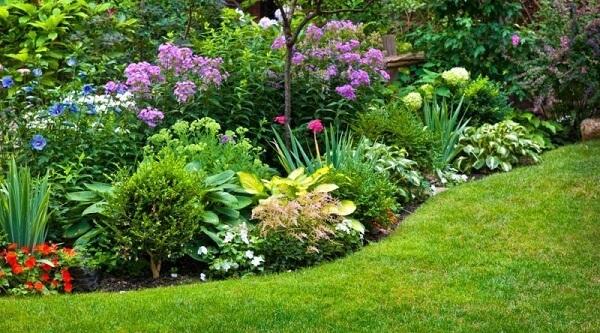 Tipos de plantas para sua casa