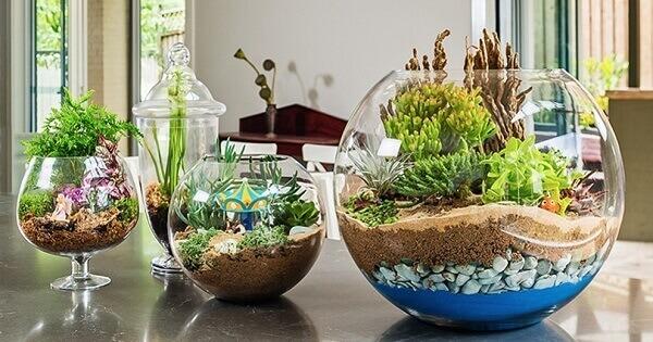 Tipos de plantas suculenta para decorar a sala