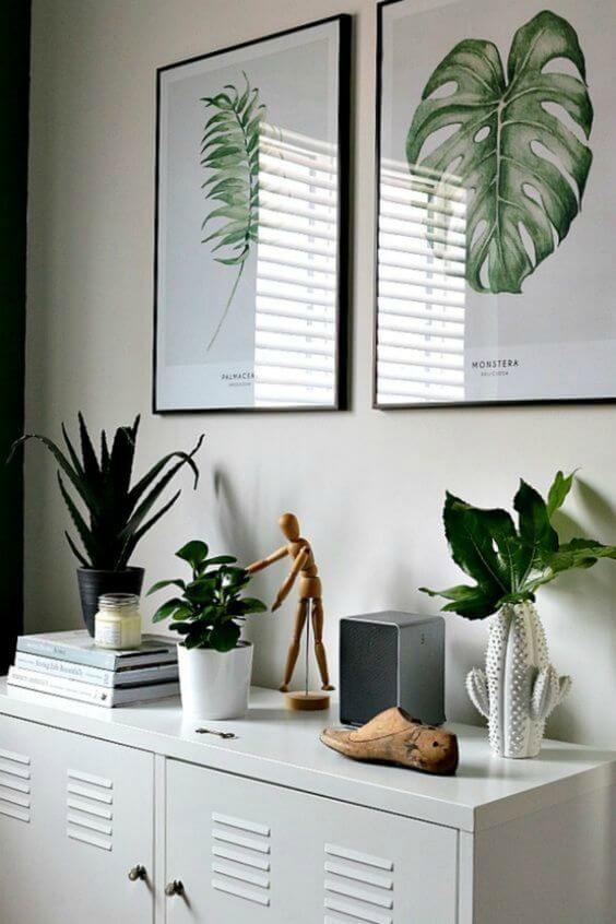 Molduras para quadros de plantas