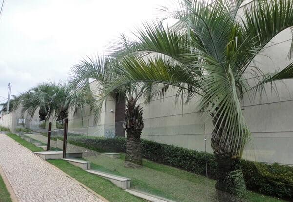 Muros modernos com coqueiros
