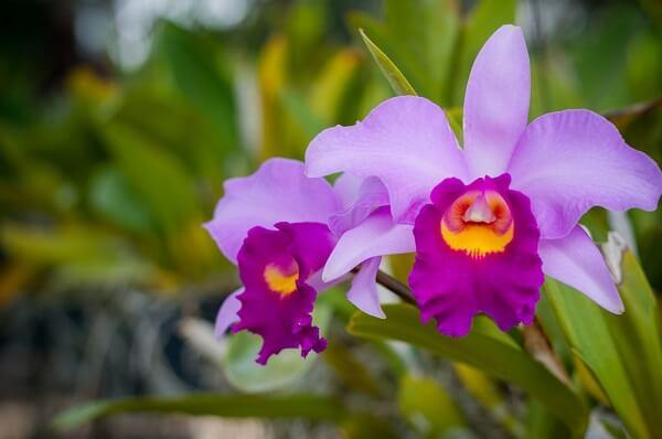 Orquídeas para ambientes internos