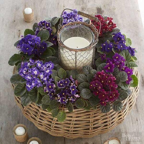 Decore a casa com violetas
