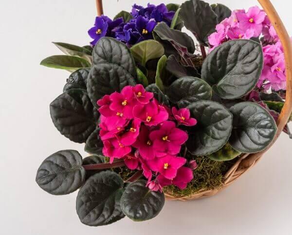 Flores de violetas em vaso