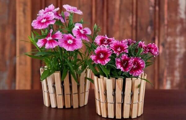 Flores do campo Cravina