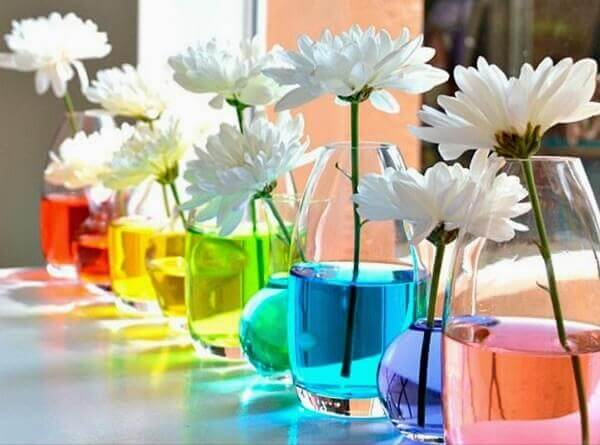 Flores do campo com água colorida