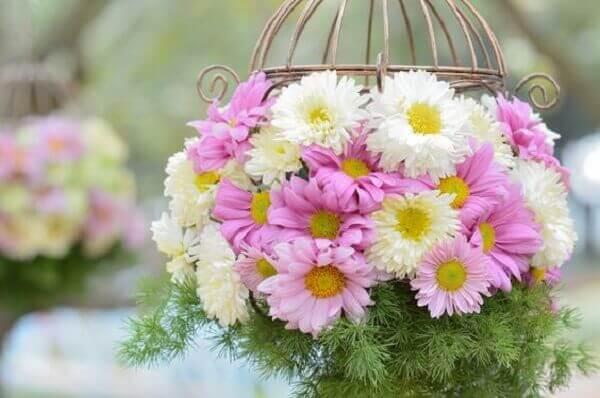 Flores do campo crisântemo