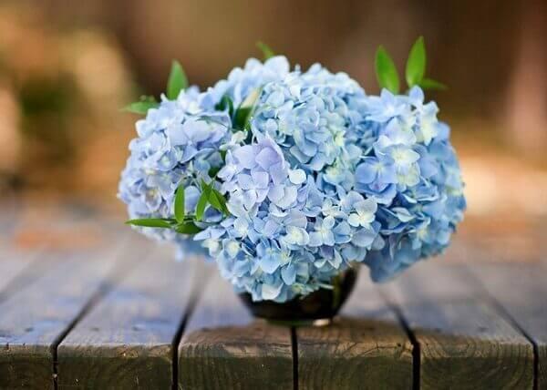 Flores do campo hortênsias azuis