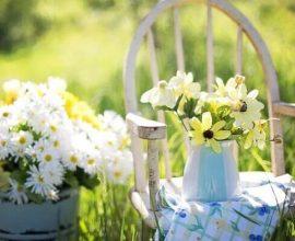 Flores do campo para decorar eventos