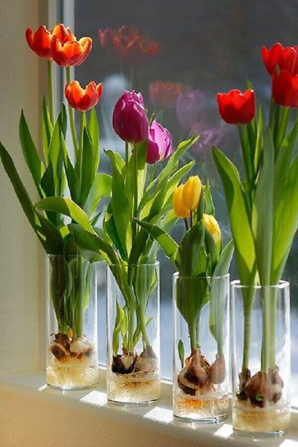 Tulipa como cuidar