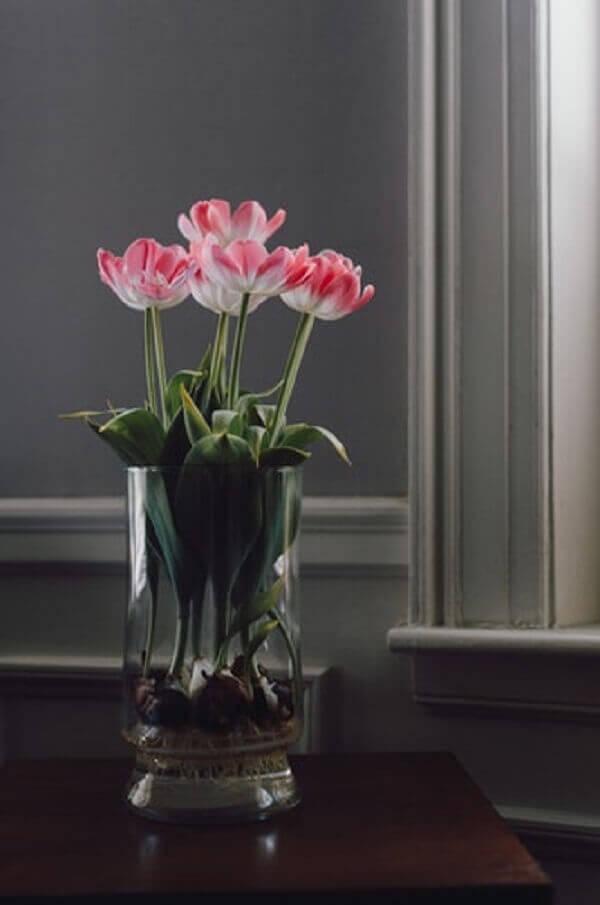 Tulipa semi aberta