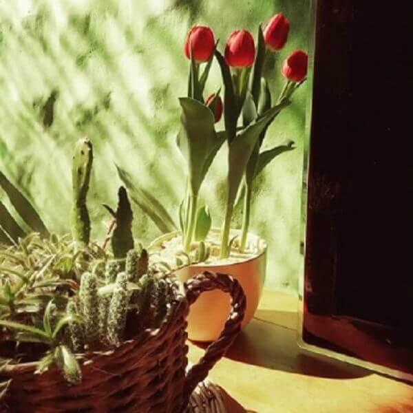 Tulipa significados