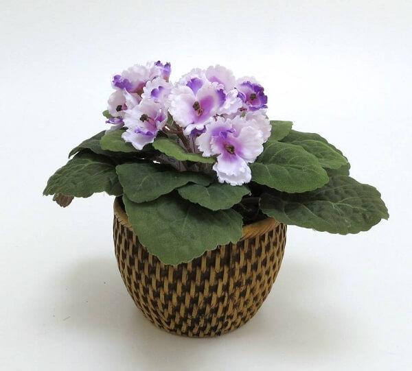 Violetas arranjo no vaso