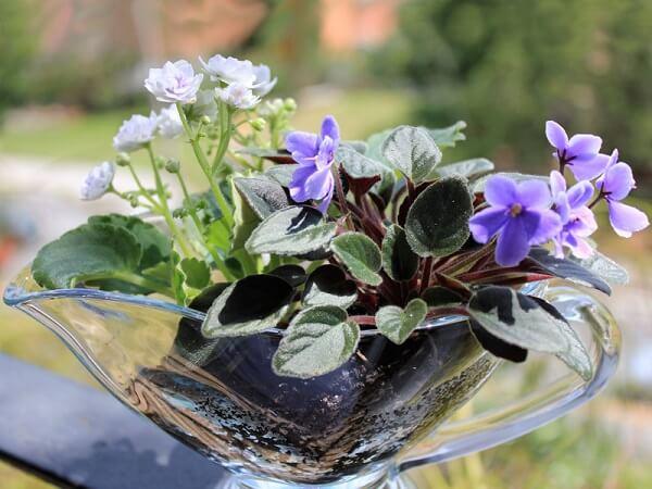Violetas na mesa arranjo