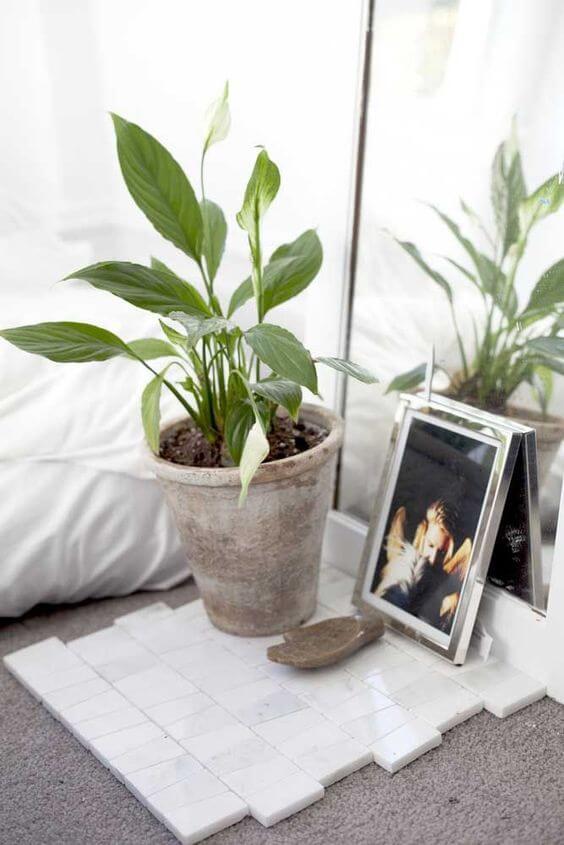 Lírio da paz na decoração de quarto
