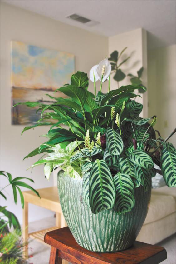 Capriche na escolha do vaso de lírio da paz para decorar sua casa